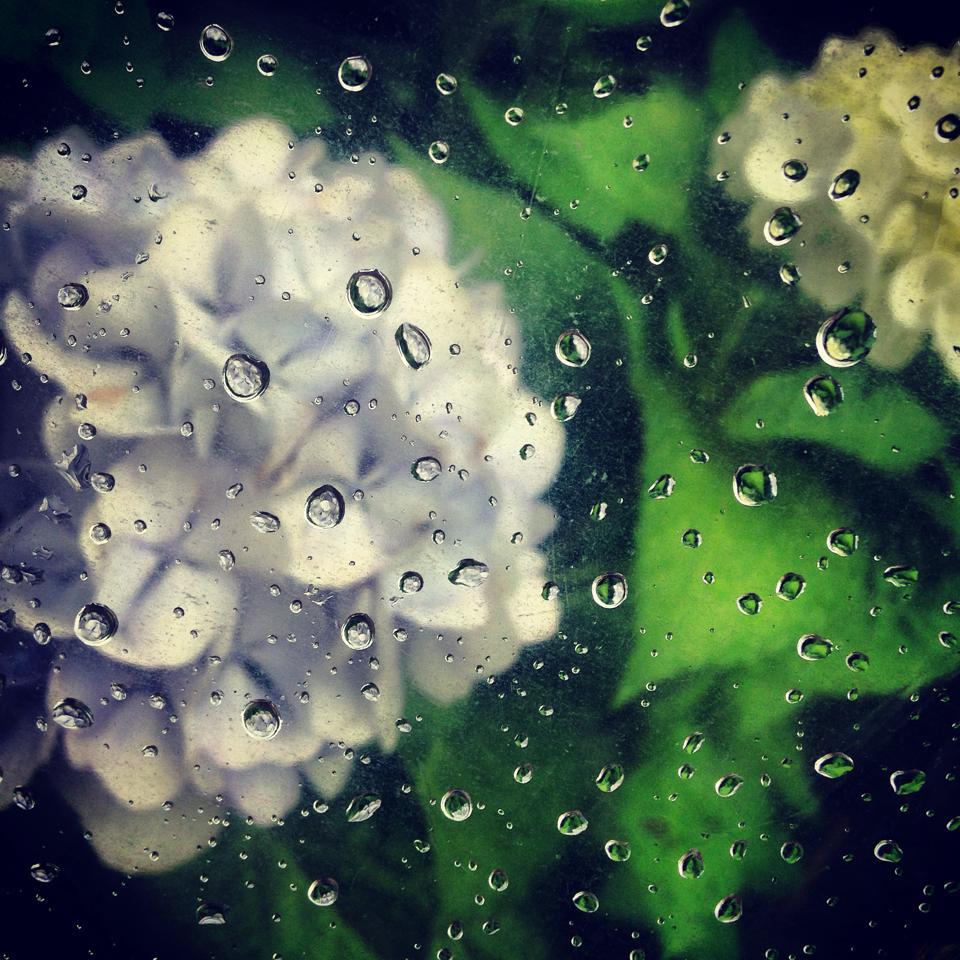 フリー素材 画像 透明傘を通して見た雨粒と紫陽花、梅雨のとある一日 ...